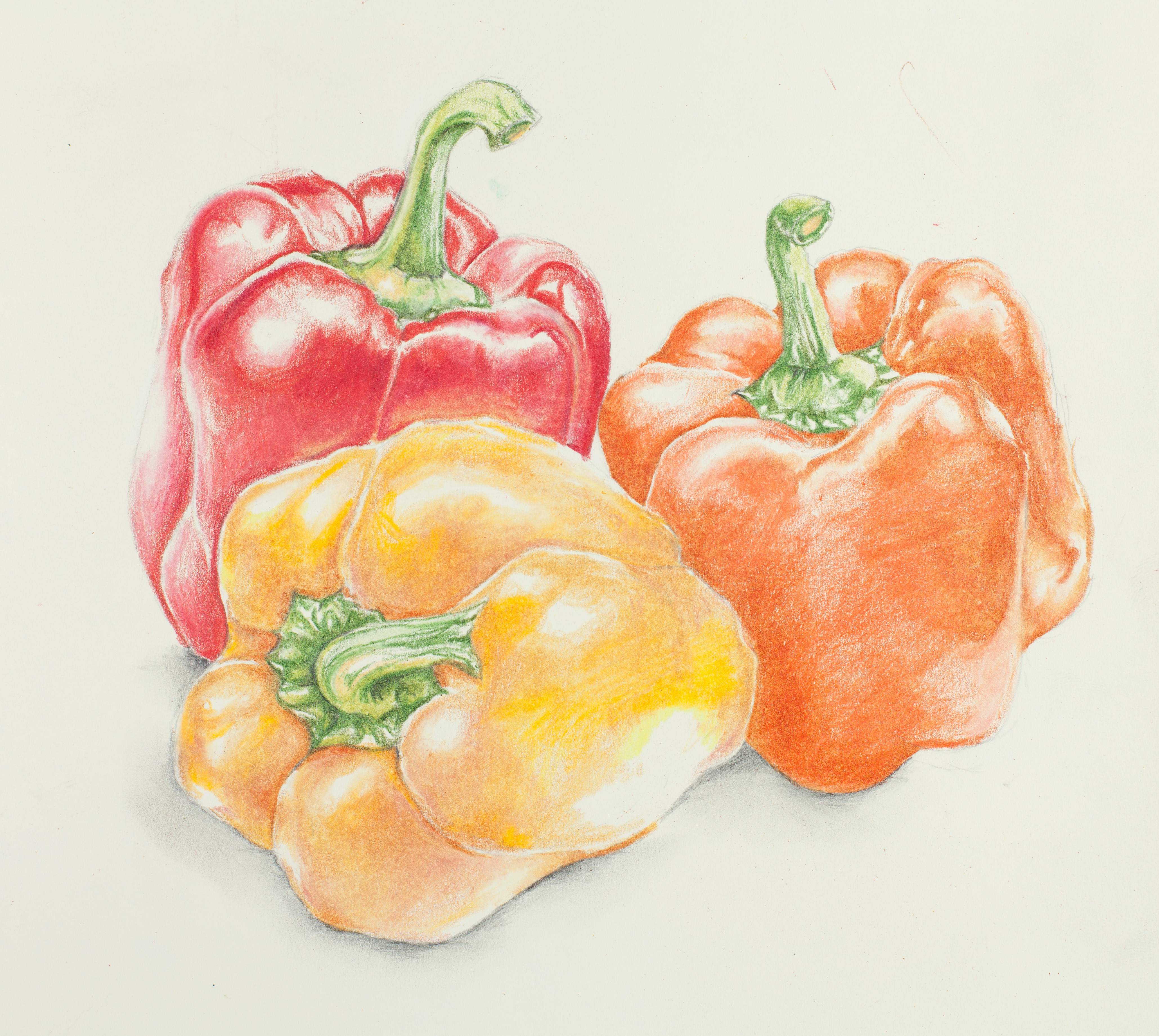 Fruit & Vegetable Still Life – Carrolyn Lakowski Illustration