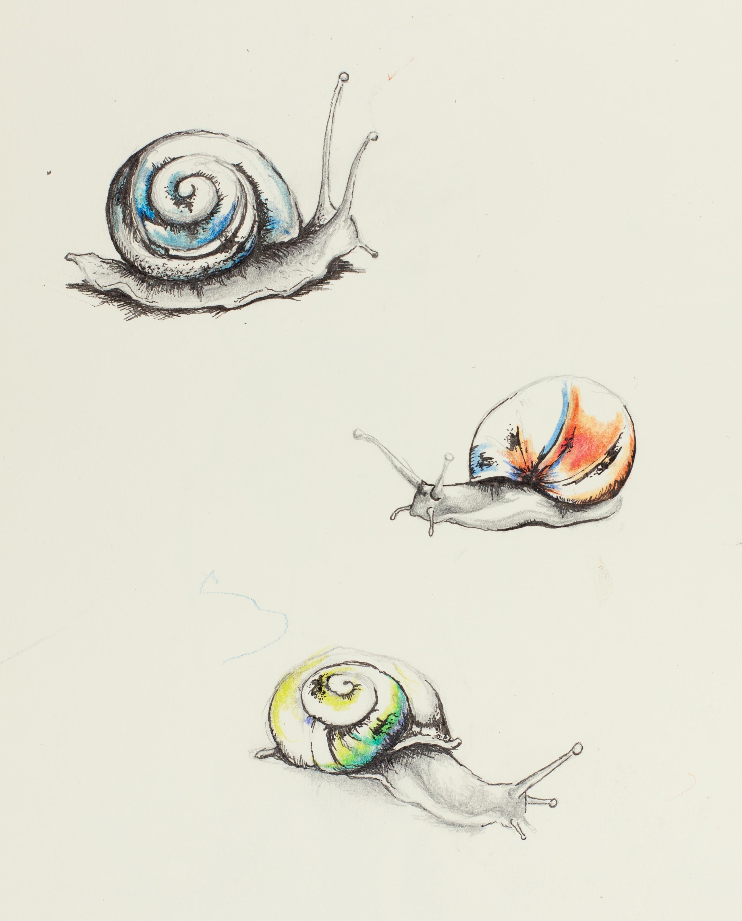 Pencil carrolyn lakowski illustration for Simple snail drawing
